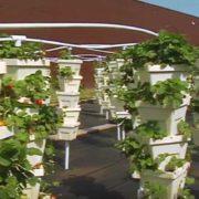 Hi Rise Garden