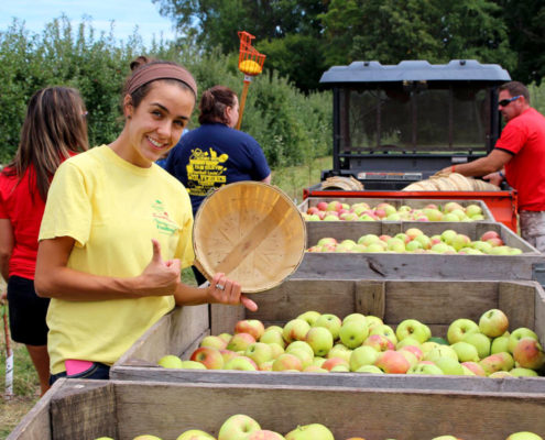 Apples for Everyone Volunteer