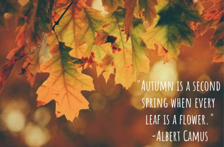 Happy First Day of Fall!