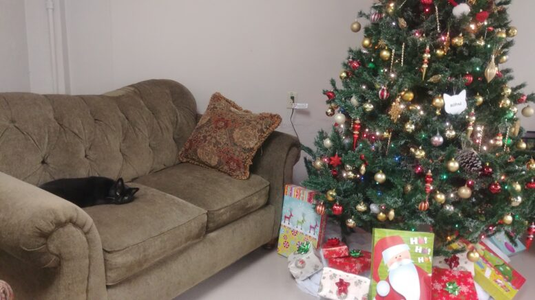 Ever since the tree went up Luna has been patiently waiting nearby to see what Santa may...
